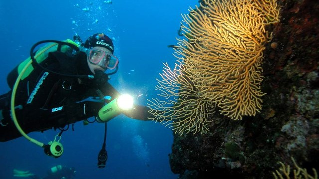 Diving Excursions (Half day)